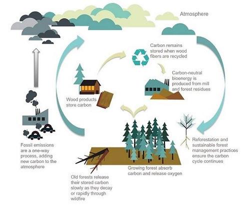 carbon-cycle.jpg