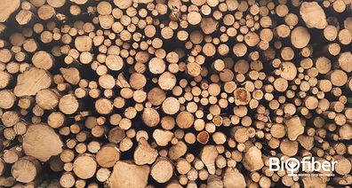 Pile of logs (unsplash).jpg