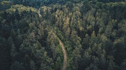 12. Forest.jpg