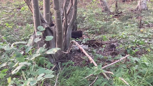 31.08.2020   Erster Waldspaziergang mit Anka, Aennie und Adda