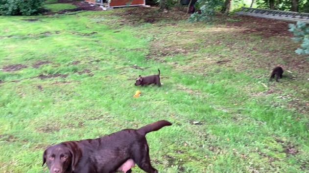 Spielen im Garten mit Mayla, Butscher und Branko
