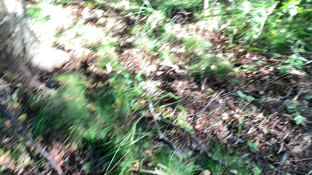 31.08.2020   Erster Waldspaziergang