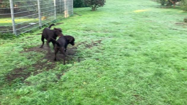 Erstmal in den Garten hinter die Moorkate und morgendliches Spielen mit den großen Hunden.