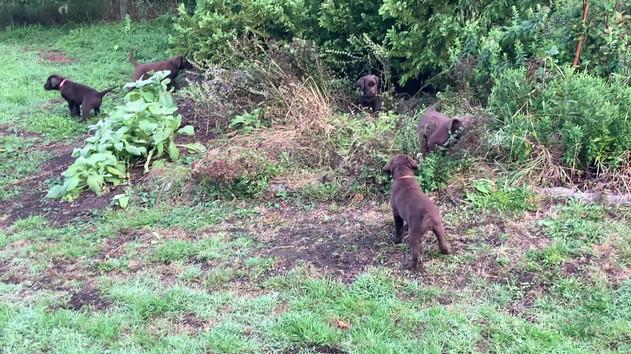 Unser wildes Beet ist ein gern genommener Spielplatz für die kleinen Geister.