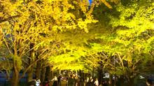 黄葉紅葉まつり♪