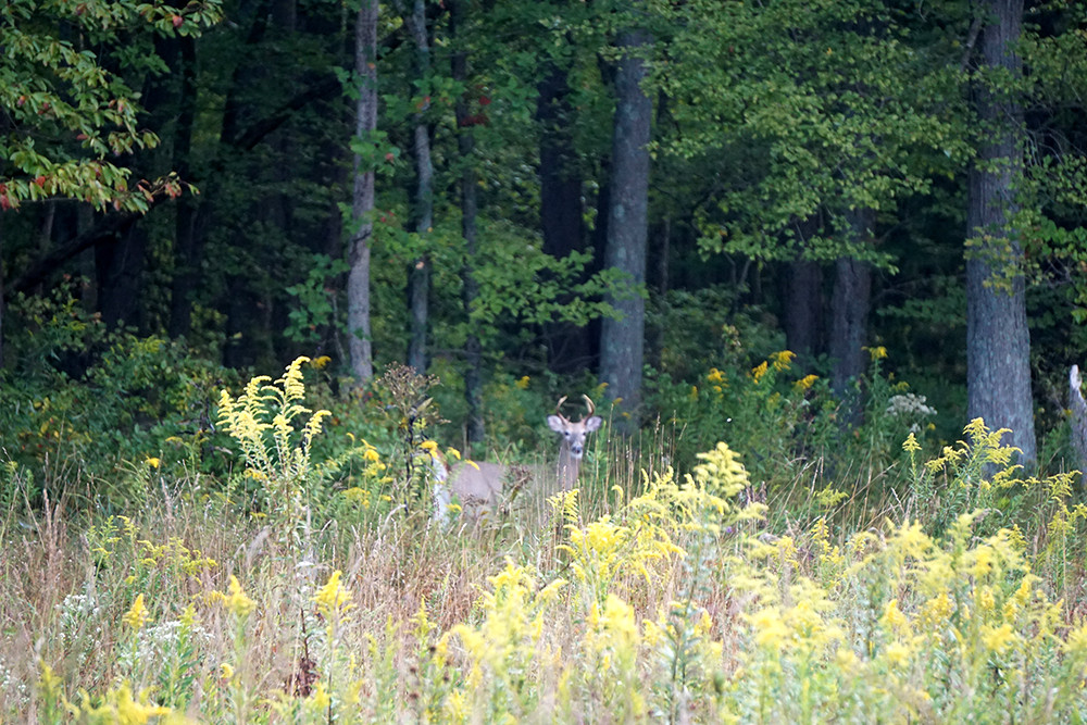 wildlifehabitat13.jpg