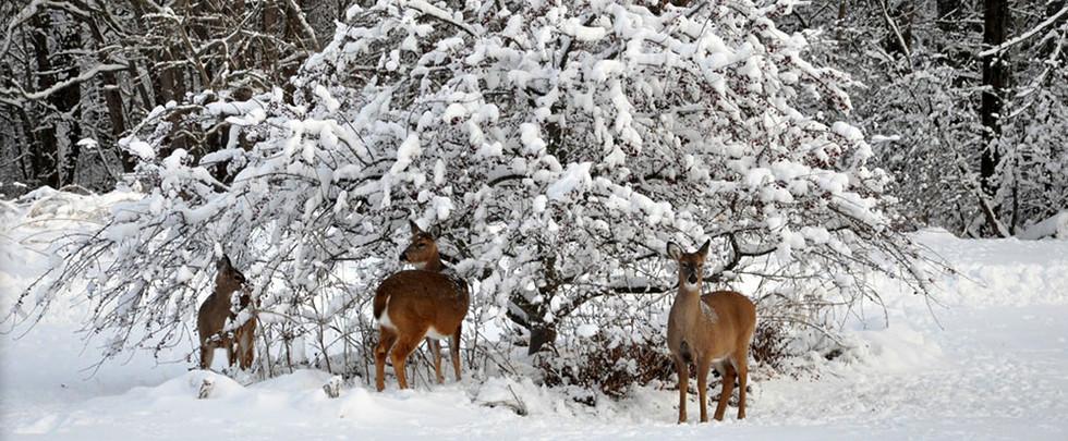 wildlifehabitat04.jpg