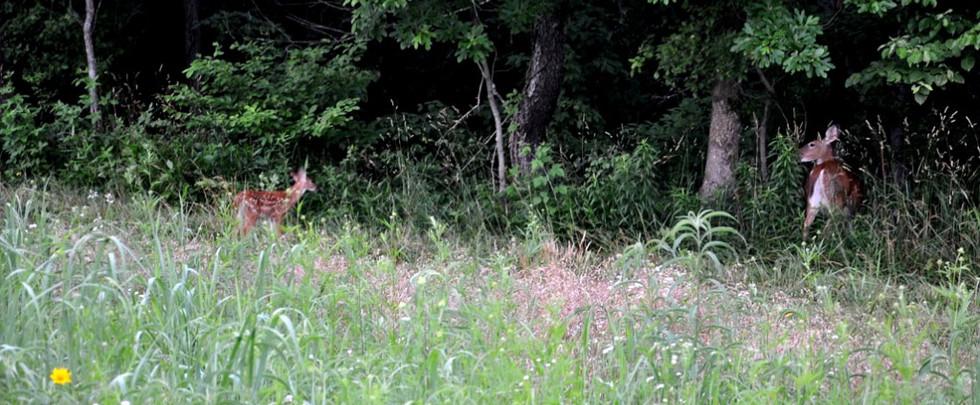 wildlifehabitat06.jpg