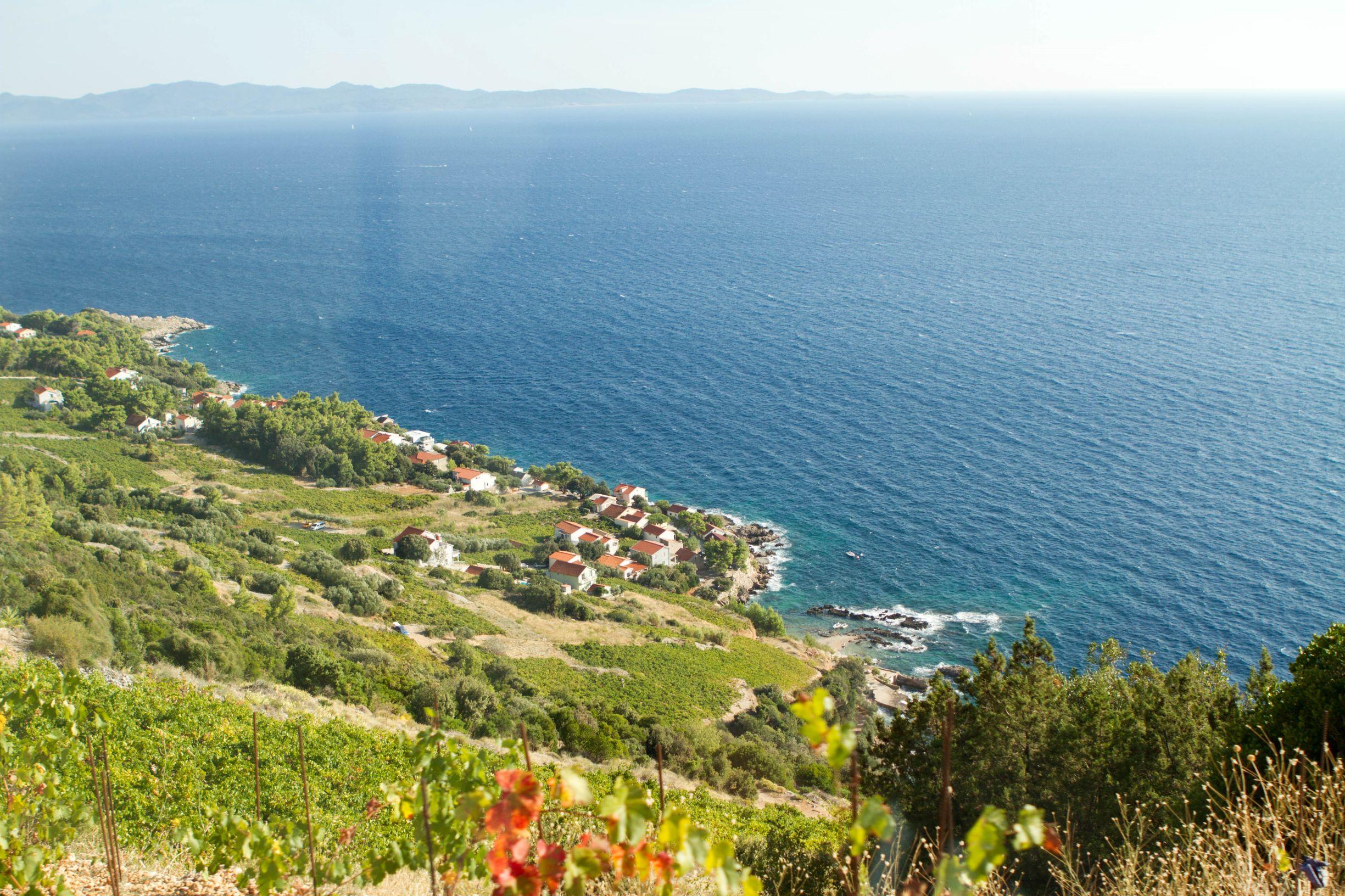 Vineyards overlooking Adriatic Sea_Pelje