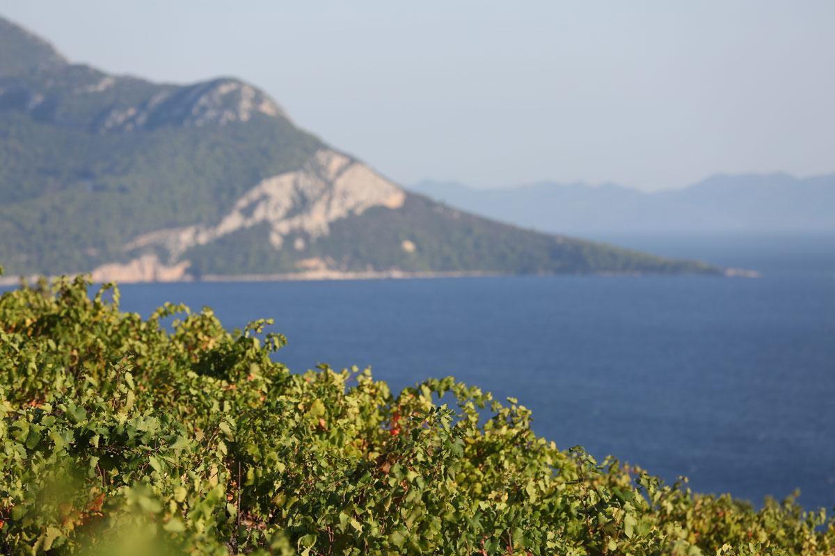 Vineyards-overlooking-the-Adriatic_Pelje