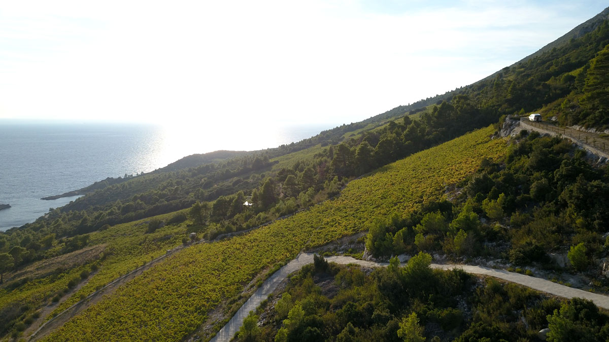 Steep-slope-vineyards-on-Peljesac-Penins