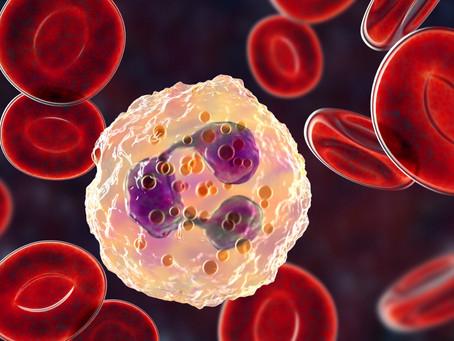Comment fonctionne notre système immunitaire ?
