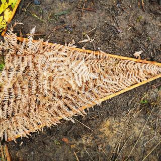 Ferns contrast 2