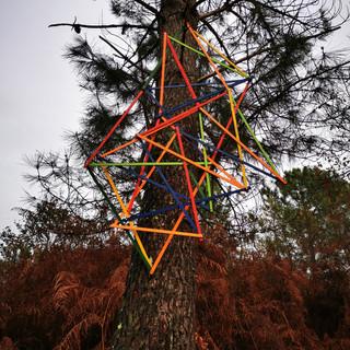 Nature entanglement