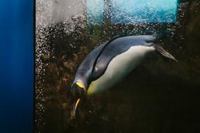 Zoo126.jpg