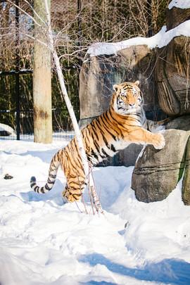 Zoo97.jpg