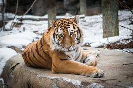 Zoo2018-23.jpg