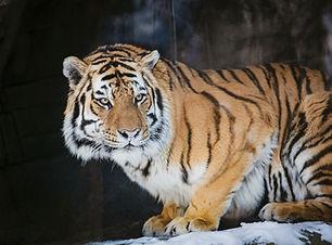 Zoo94.jpg