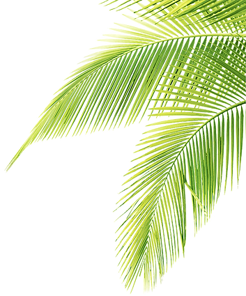 palm tree left brighter.png