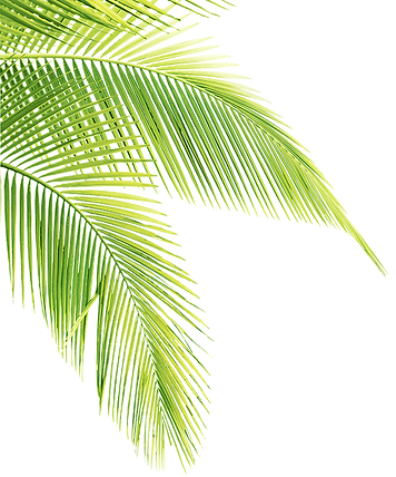 palm tree right brighter.png