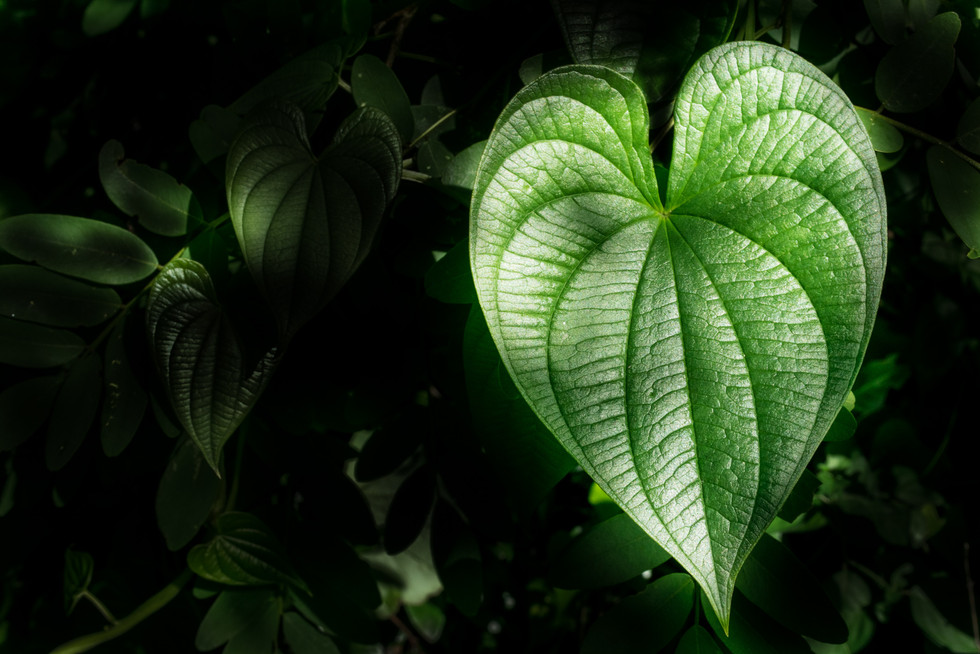 Forest's heart