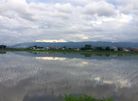 ✨田んぼの風景✨