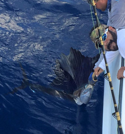 Sail Fish in the Gulf