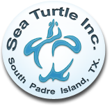 sea-turtle-inc-logo.png