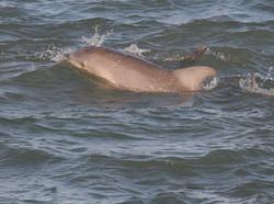 Gulf of Mexico marine live