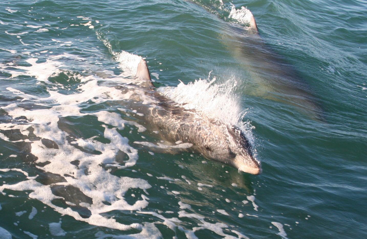 Isla Tours Dolphin Watch