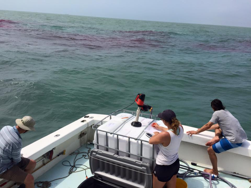 Research Trips Gulf of Mexico