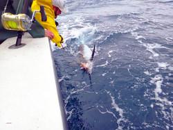 Sports Fishing on the Salt Walker