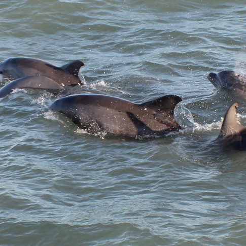 South Padre Island Dolphin Watch Trips