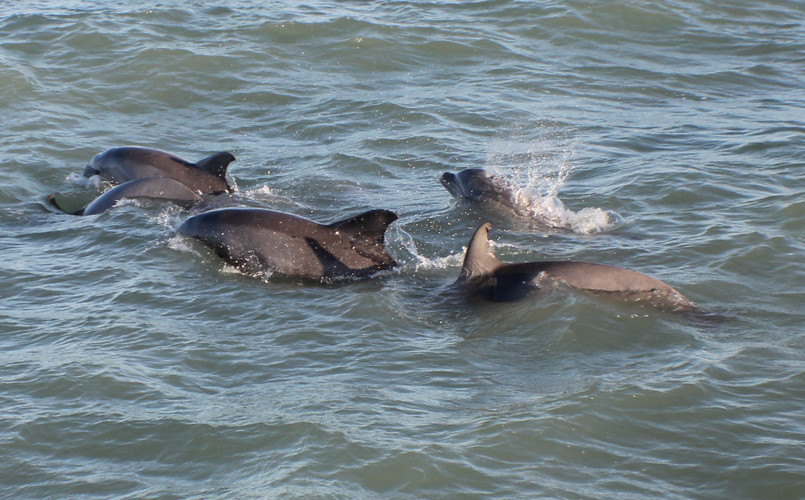 Dolphin Watch Trips