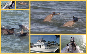 South Padre Live Dolphin Watch