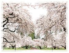 Graduation Program Template C (Cherry Blossom)3.jpg