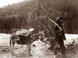 PROSPECTING THEN & NOW man mule pic