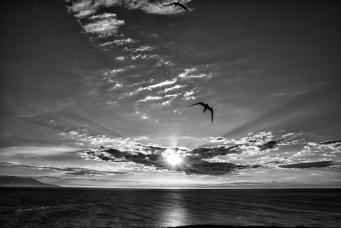 tramonto-sterna-artica-web