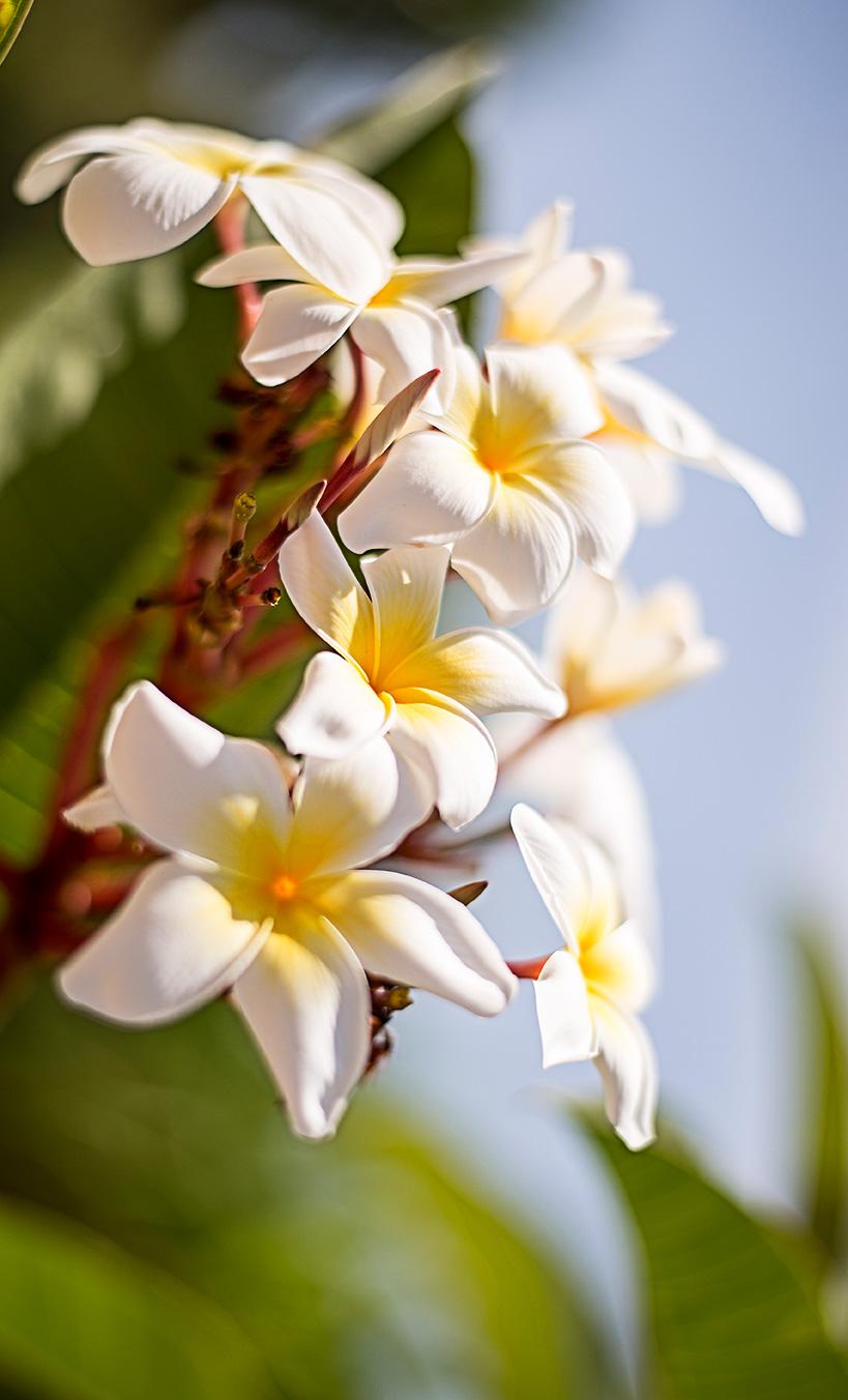 fiore-bianco-web