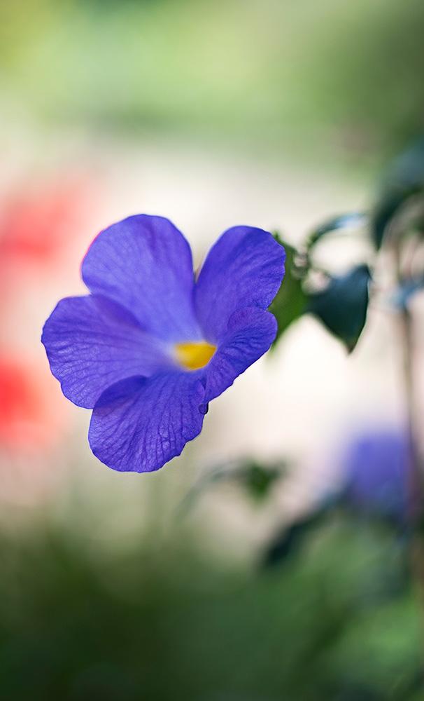 fiore-viola-web