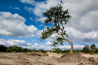 nationaalpark-loonse-en-drunense-duinen.