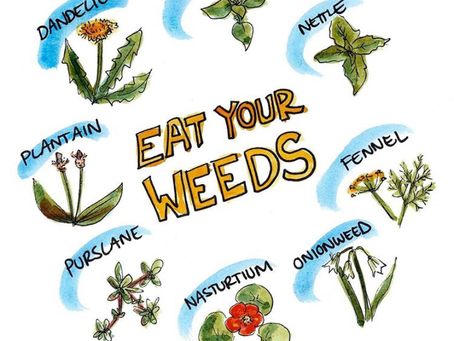 Eat your weeds!