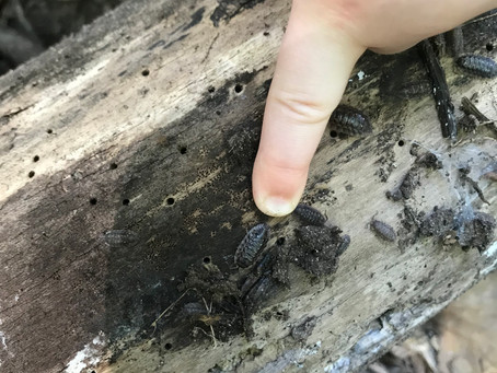 We found Woody the Woodlouse in The Hideaway!