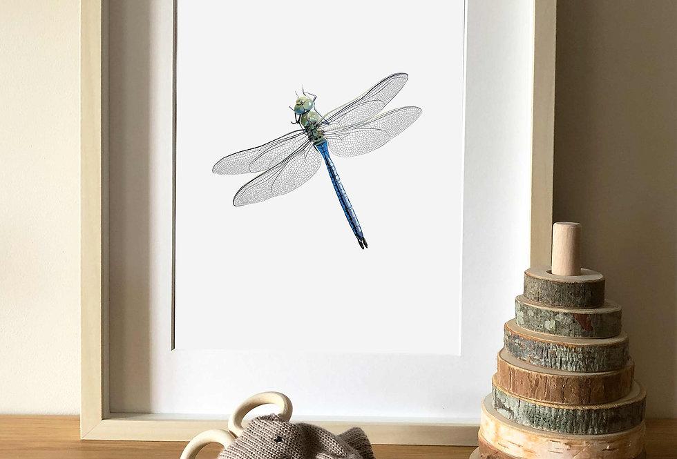 Emperor Dragonfly illustration print