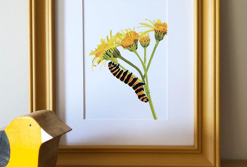 Colour pop framed Caterpillar print