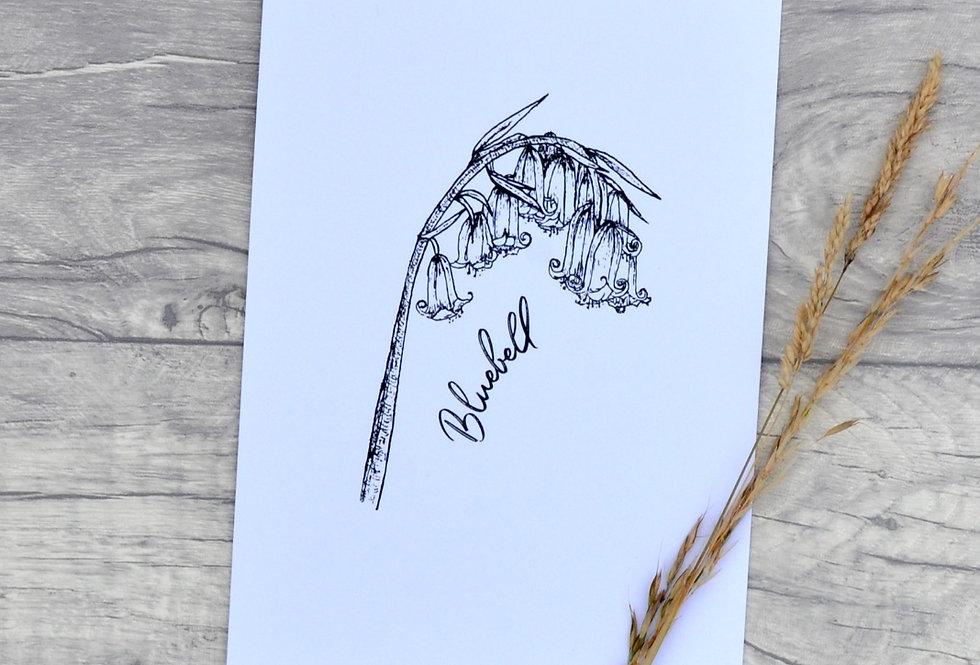 Bluebell illustration print  - Crisp