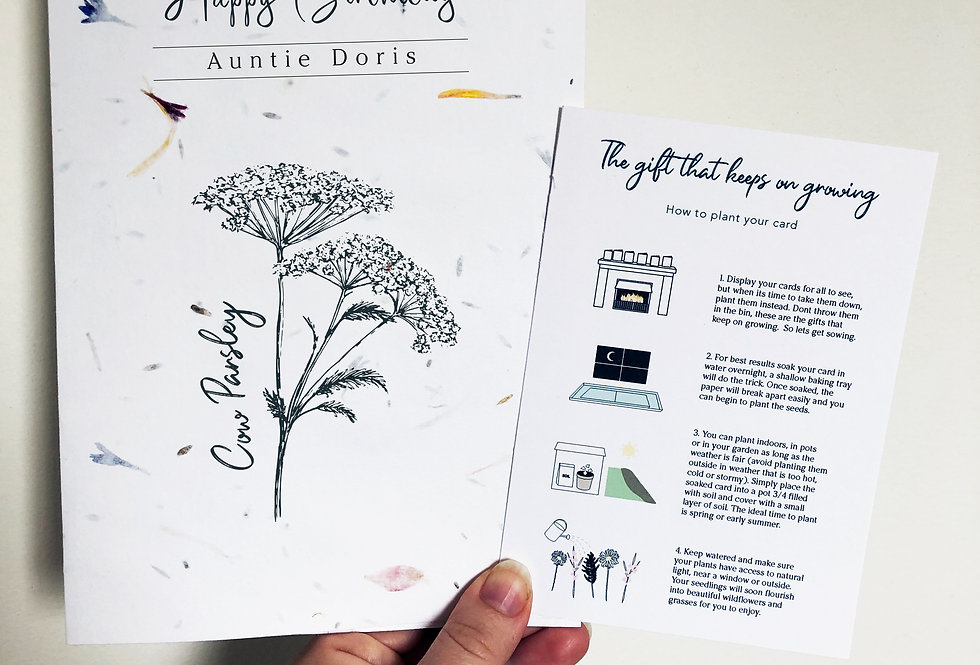 Plantable seed card - Cow Parsley