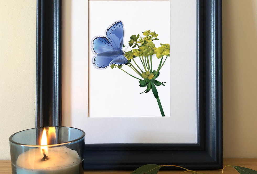 Colour pop framed Butterfly print