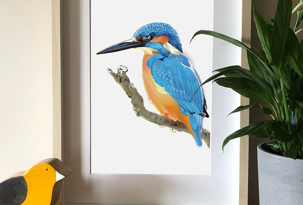 Kingfisher Illustration print