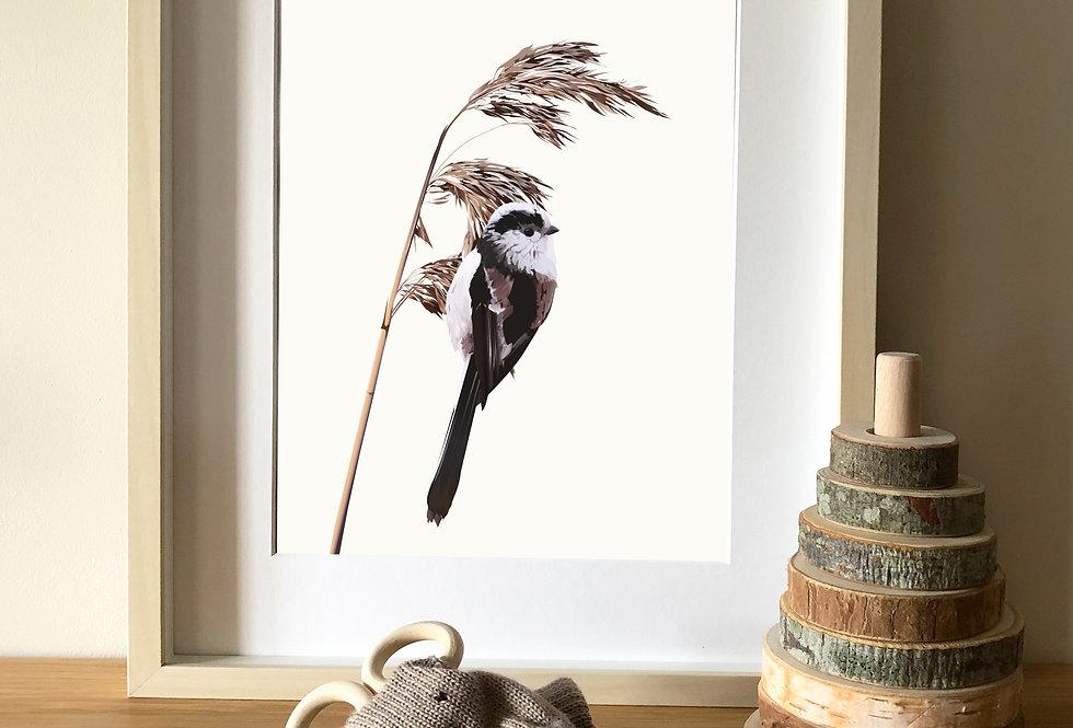 Long Tailed Tit - illustration print